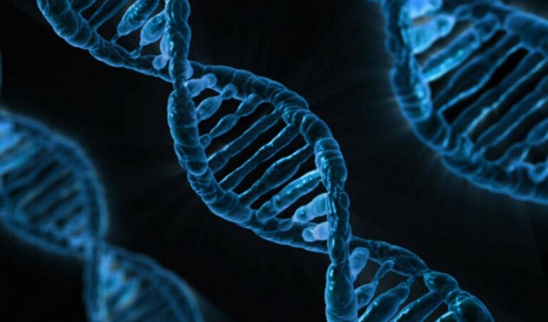 Ali so res geni in DNK tisti, ki določajo našo usodo?