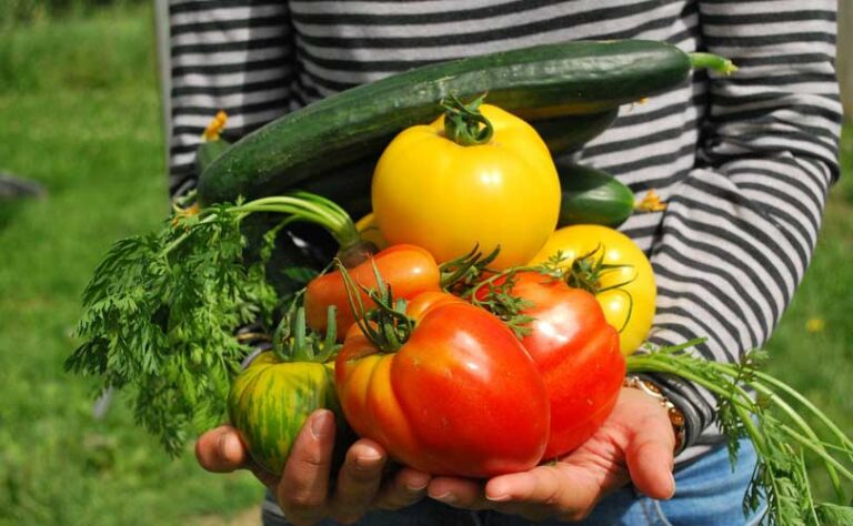 Kje kupiti ekološko hrano?
