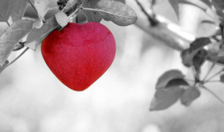Potovanje po poti srca