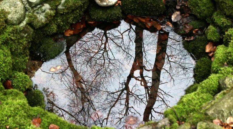 Zgodba o vodi in modrosti