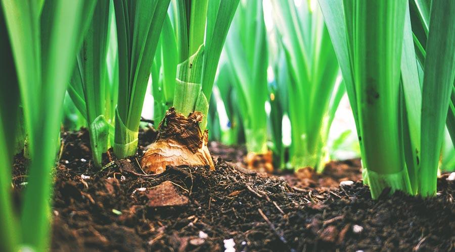 socialna-resonanca-praksa-kmetijstvo