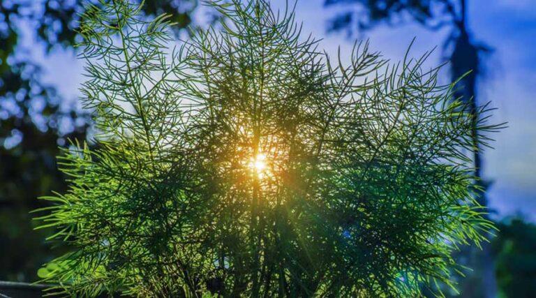 Svetloba onkraj vsega